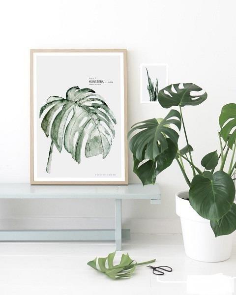 انواع گیاه آپارتمانی برگ پهن