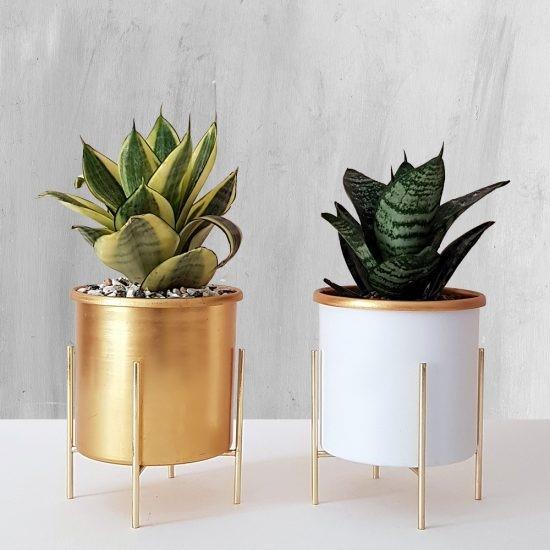 آشنایی با انواع گیاه آپارتمانی پهن برگ + نحوه نگهداری