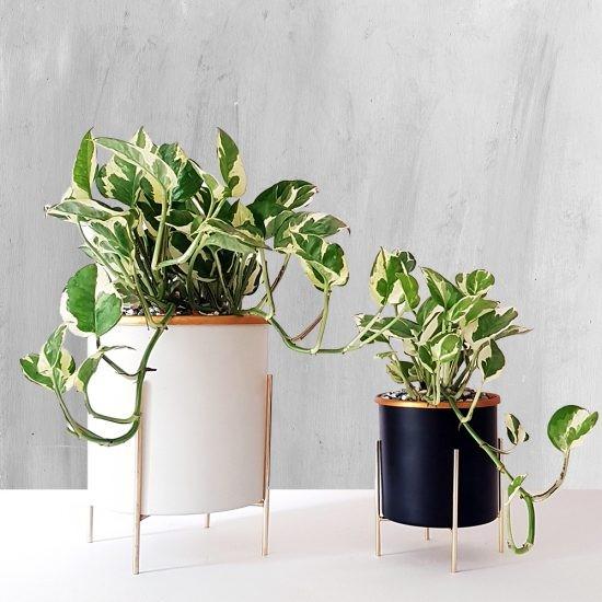 گیاه آپارتمانی تصفیه کننده هوا چیست و چگونه عمل می کند؟