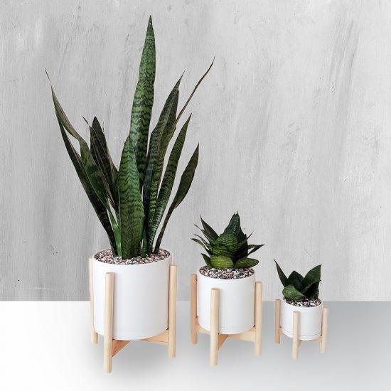 انواع گیاه تزئینی آپارتمانی با ظاهری متفاوت و جذاب!