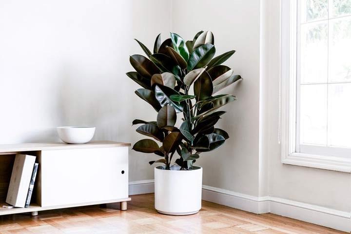 گیاهان آپارتمانی تصفیه کننده هوا را بشناسید