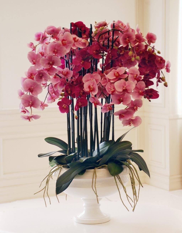 بهترین گیاه آپارتمانی گلدار چه ویژگی هایی دارد؟