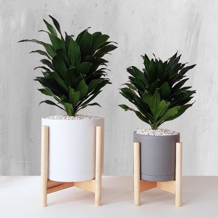 گیاه آپارتمانی بدون نیاز به نور وجود دارد؟!