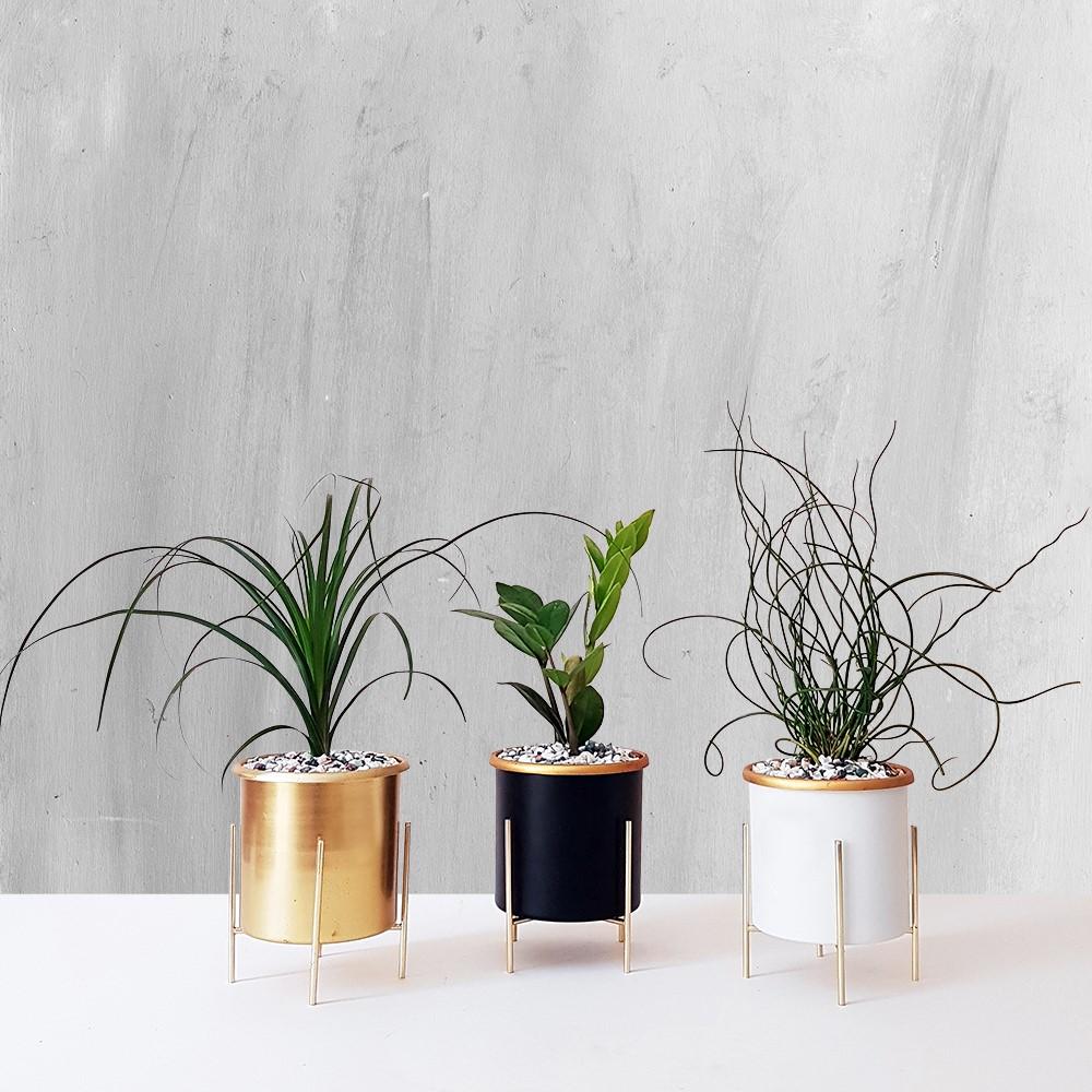 انواع گیاهان آپارتمانی جهت تصفیه هوا
