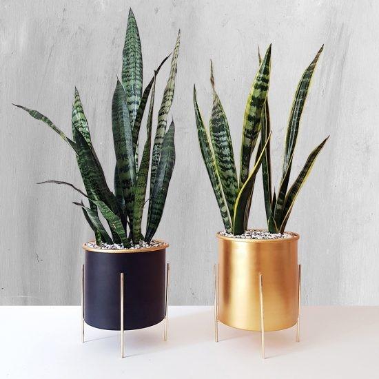چگونه گیاه آپارتمانی تولید اکسیژن می کند؟!