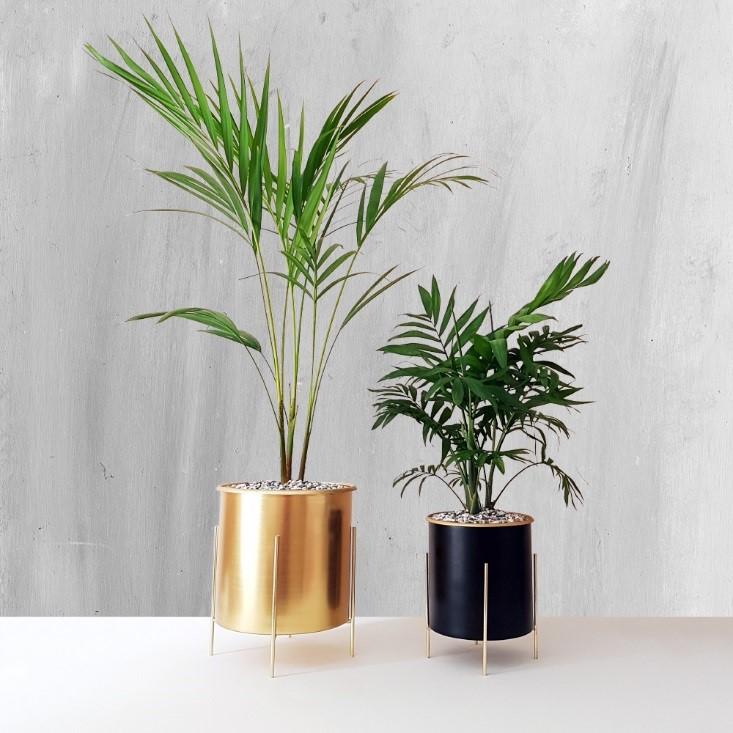 گیاه آپارتمانی غیر سمی