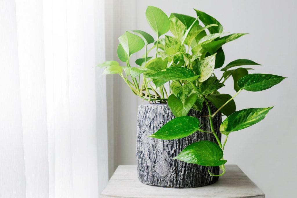 انواع گل و گیاه آپارتمانی چه ویژگی هایی دارند؟
