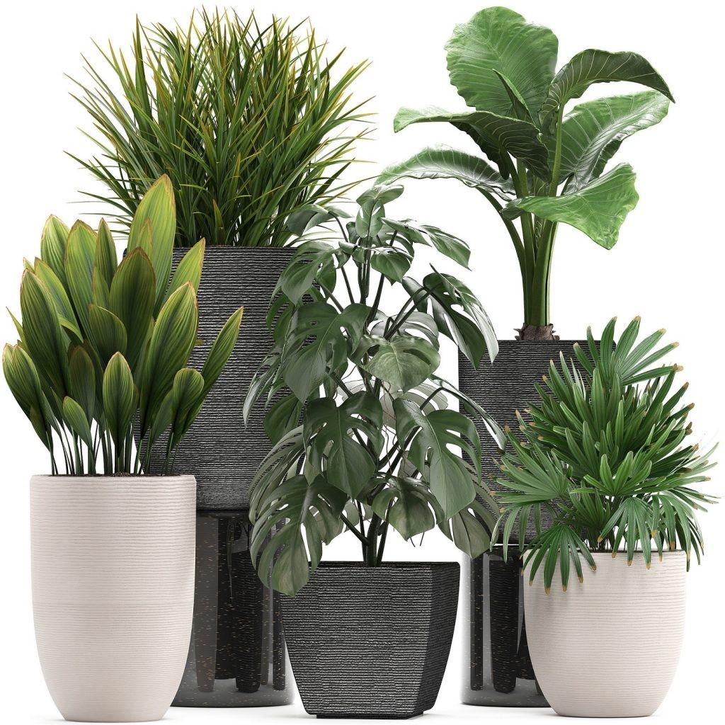 برای پرورش گل و گیاه آپارتمانی چه باید کرد؟