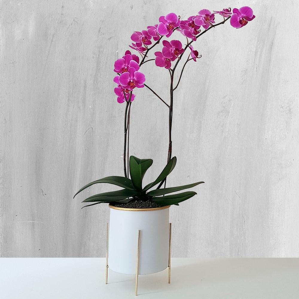 با گیاه آپارتمانی همیشه گلدار آشنا شوید!