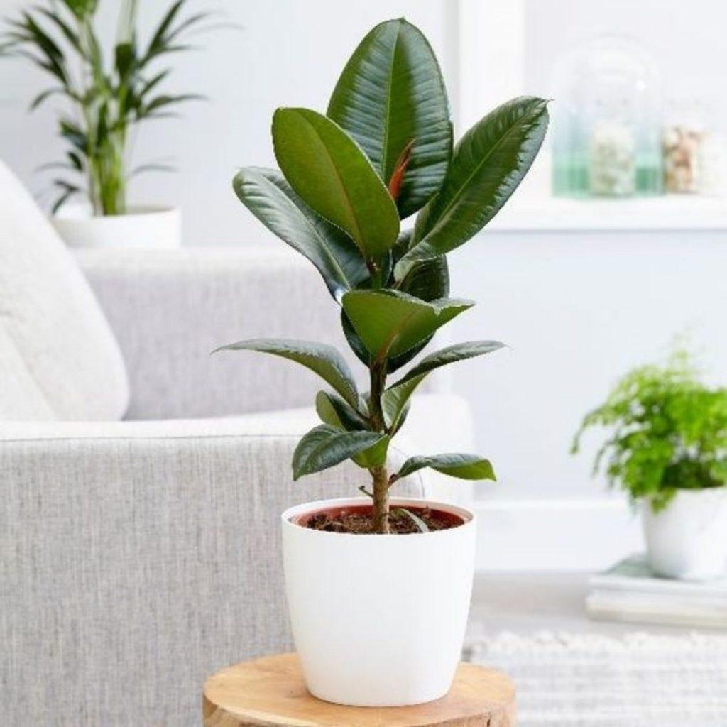 انواع گیاه آپارتمانی جنگلی؛ نمایی متفاوت در خانه!