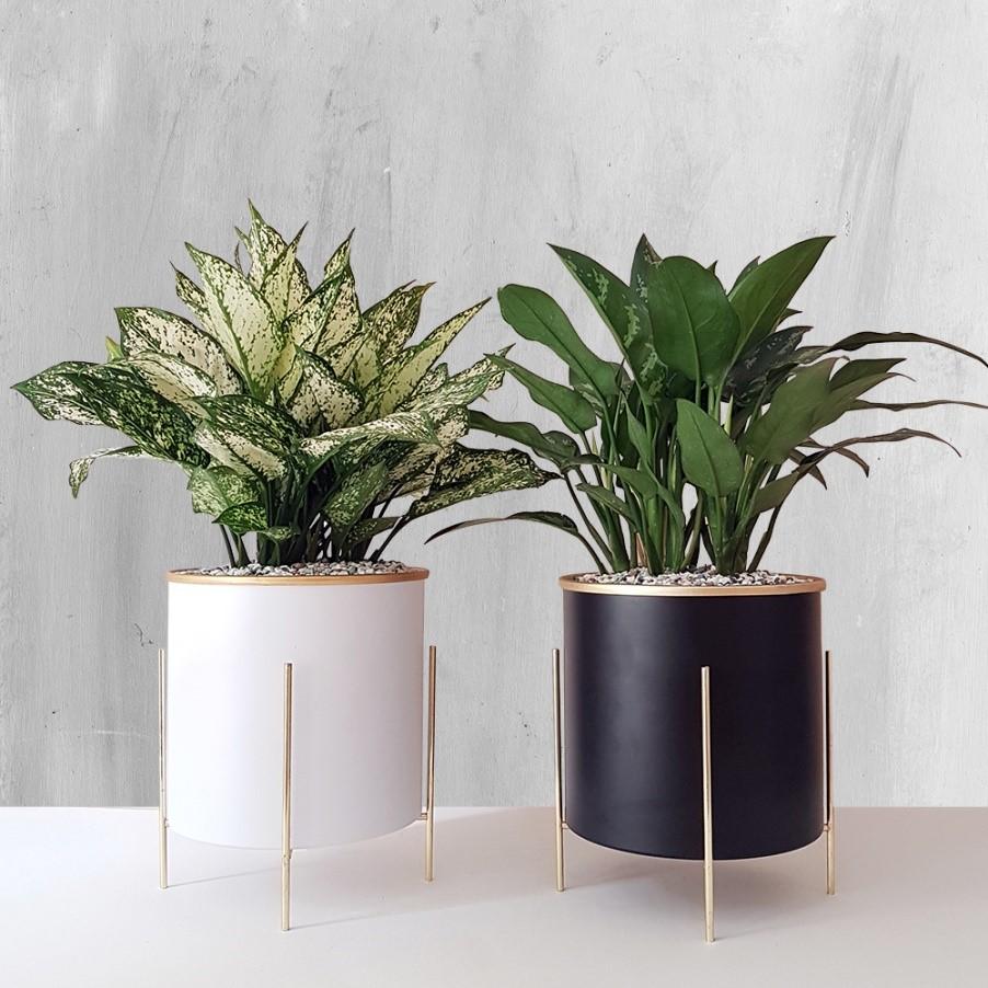 شرایط نگهداری از گیاهان آپارتمانی مقاوم و سایه دوست