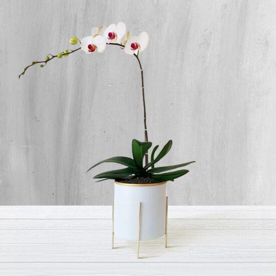 گلدان ارکیده| ویستور