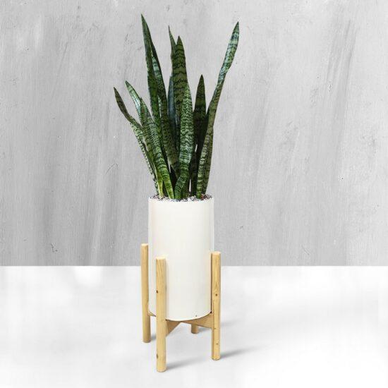 ویستور|گیاه
